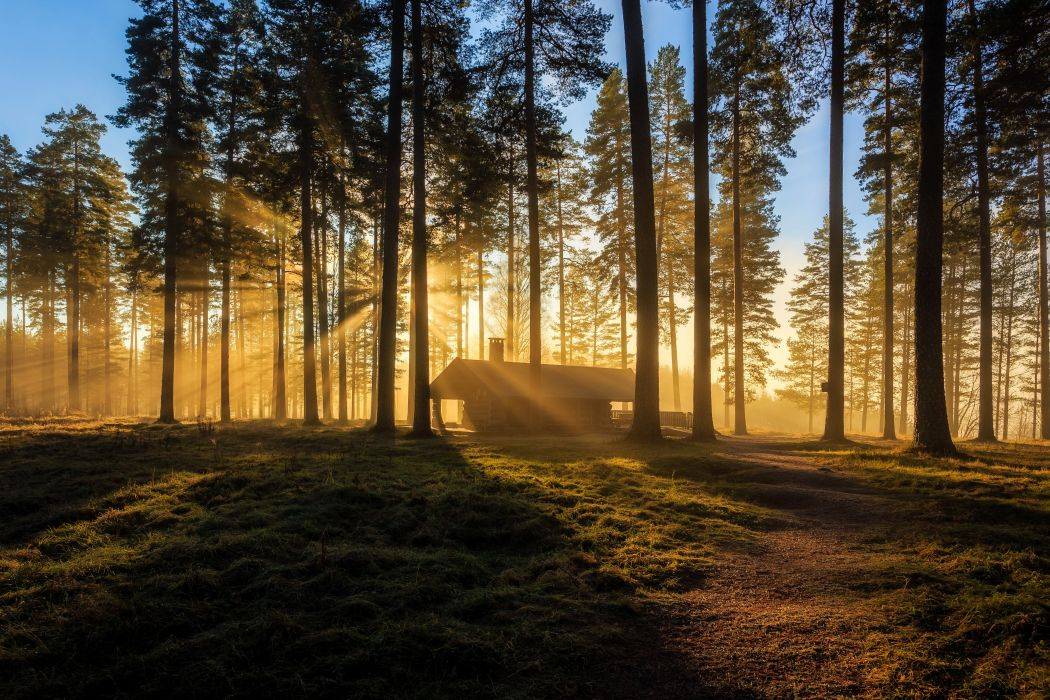 Sweden Forests Houses Trees Rays of light Arvika Nature wallpaper