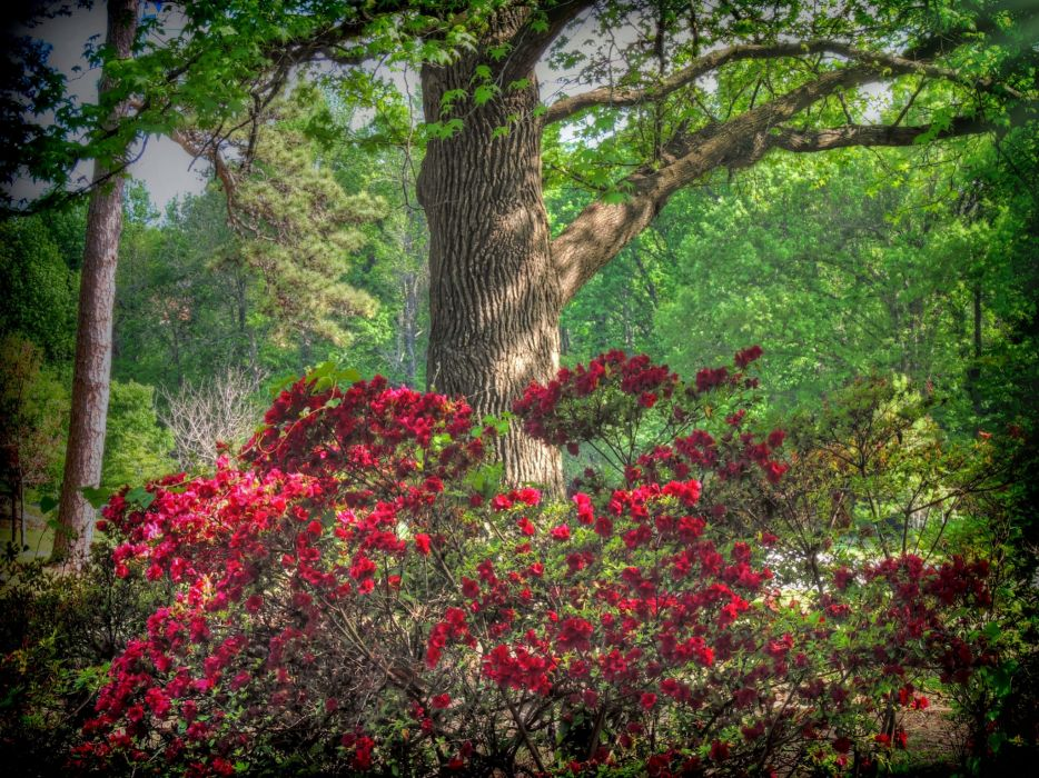 USA Parks Rhododendron Trunk tree Honor Heights Park Nature wallpaper