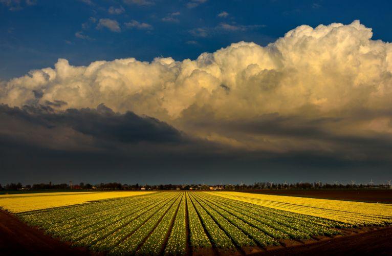 Netherlands Fields Tulips Sky Clouds Nature wallpaper
