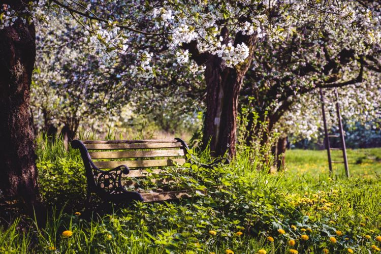 Parks Flowering trees Bench Grass Trunk tree Nature wallpaper