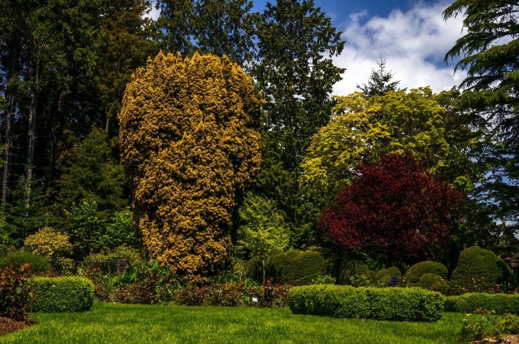 Parks Trees Shrubs Nature wallpaper