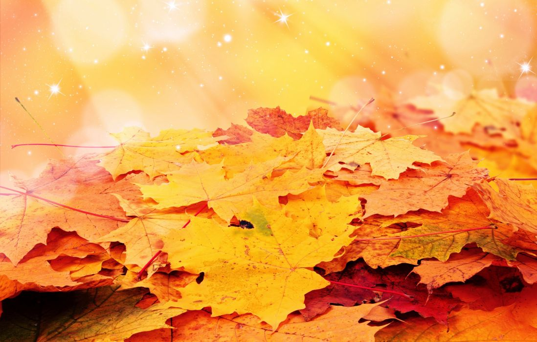 Autumn Foliage Maple Nature wallpaper
