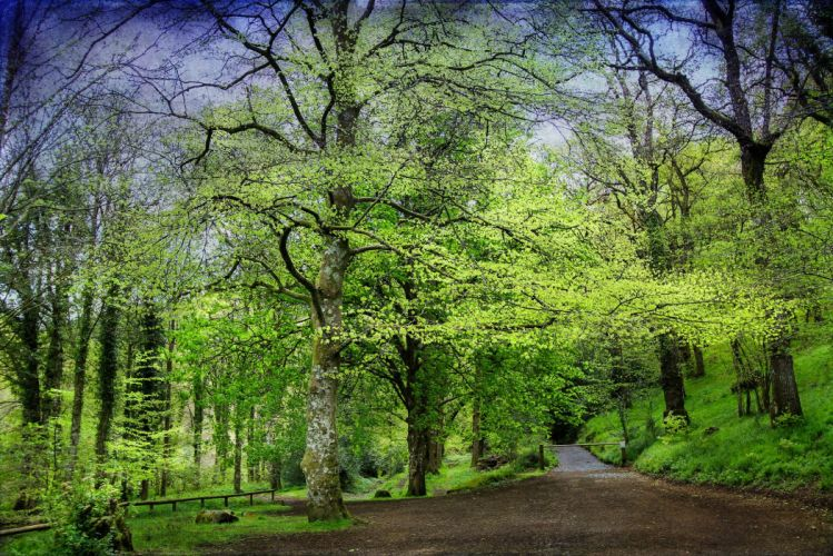 Roads Forests Trees Nature wallpaper
