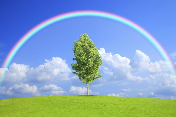 Sky Clouds Rainbow Trees Nature wallpaper