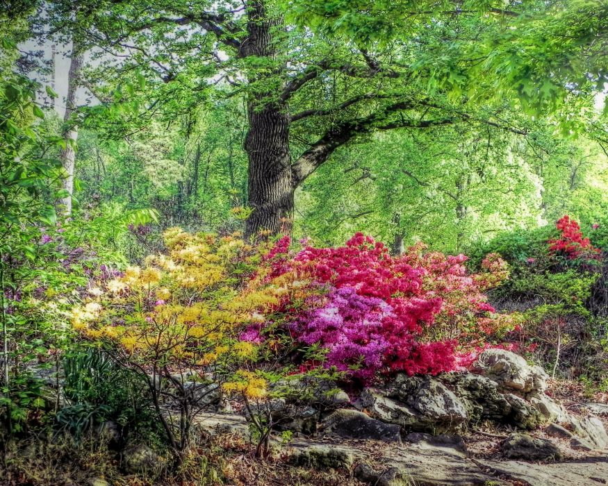 USA Parks Spring Rhododendron Trees Honor Heights Park Nature wallpaper
