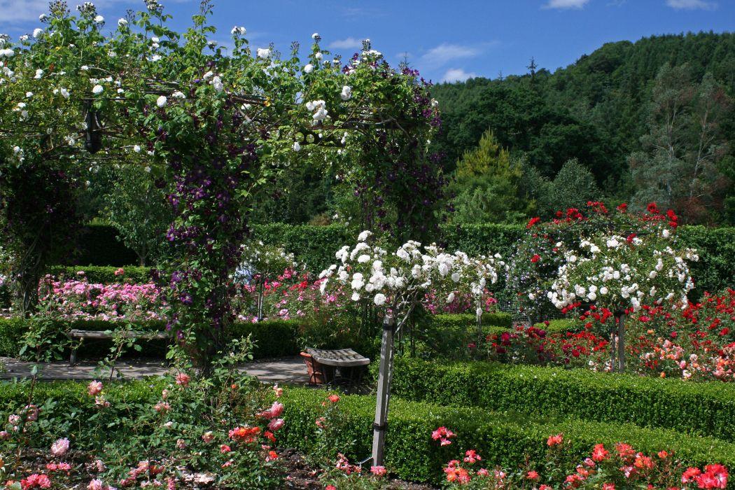 England Gardens Roses Shrubs Rosemoor Gardens Devon Nature wallpaper