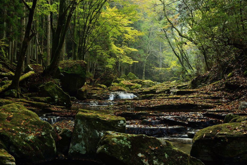 Forests Stones Trees Moss Stream Nature wallpaper
