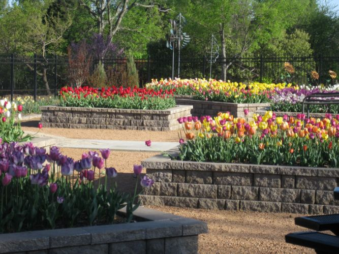 USA Parks Tulips Honor Heights Park Nature wallpaper