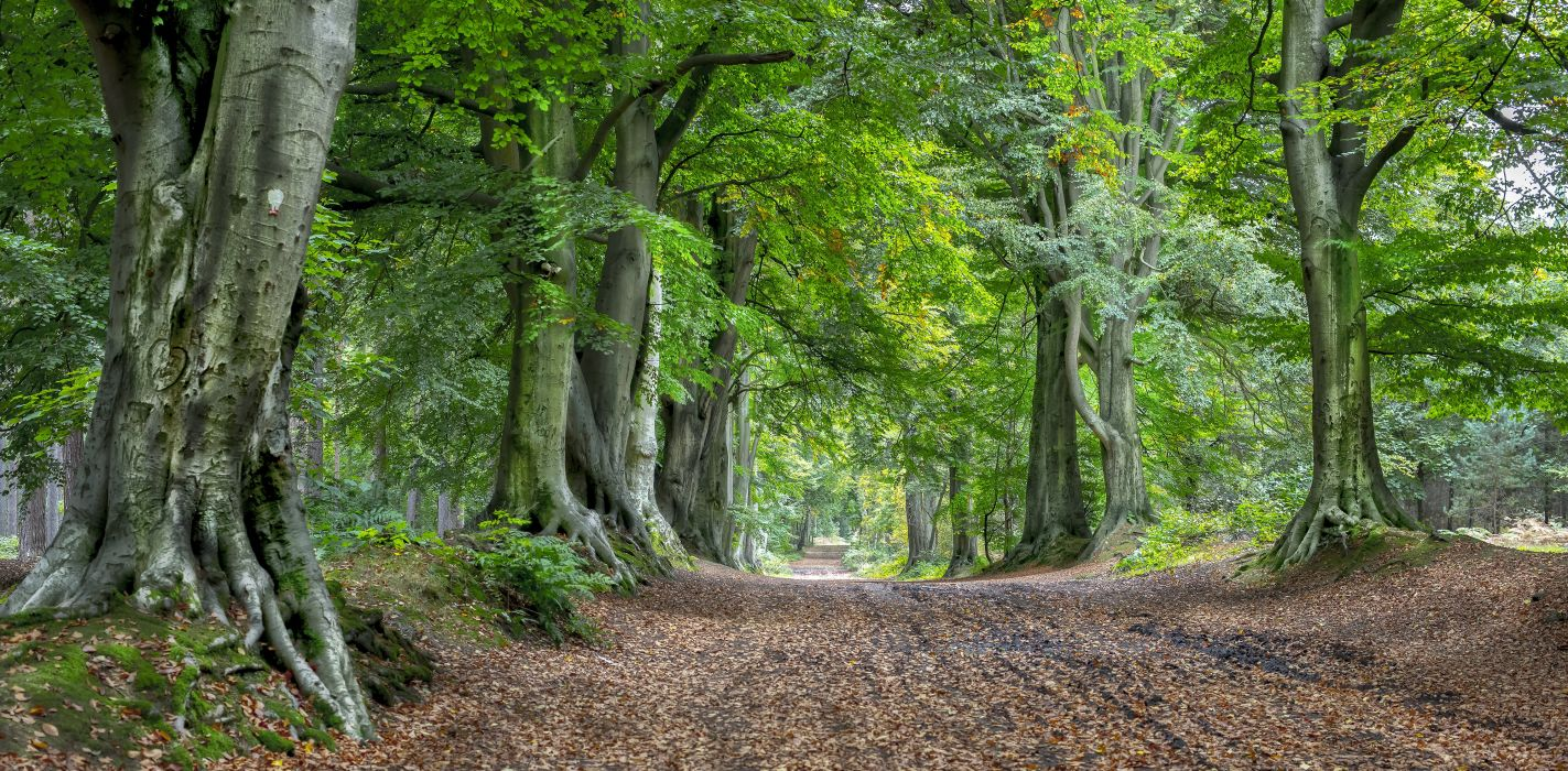 Forests Roads Trees Nature wallpaper