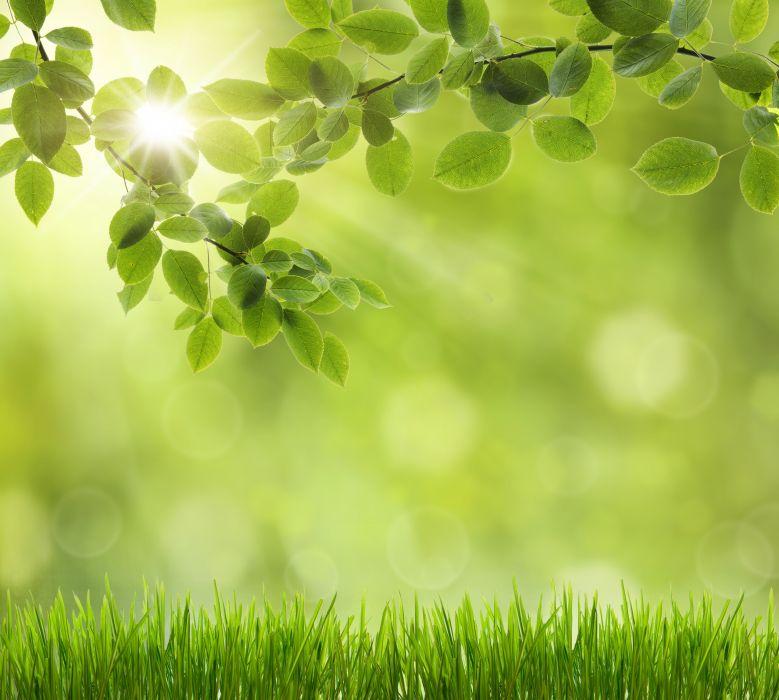 Grass Foliage Nature wallpaper