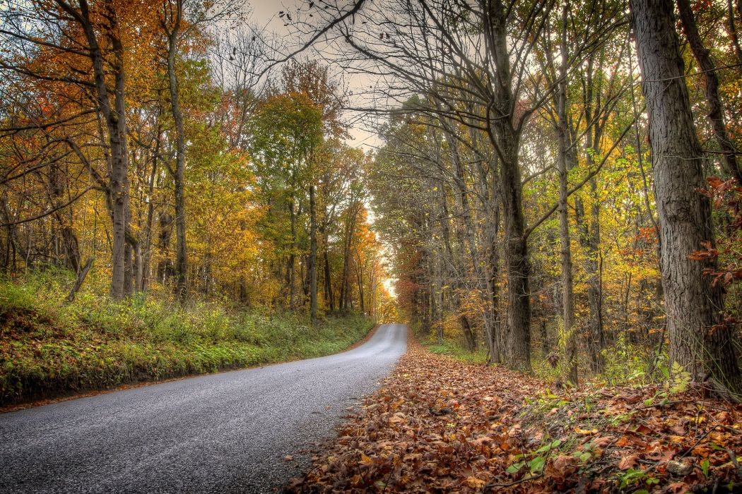 Roads Autumn Forests Trees Nature wallpaper