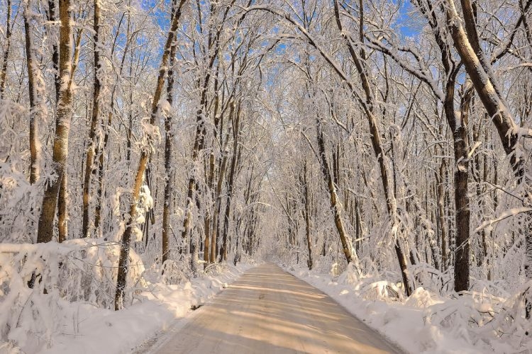 Winter Forests Roads Snow Nature wallpaper