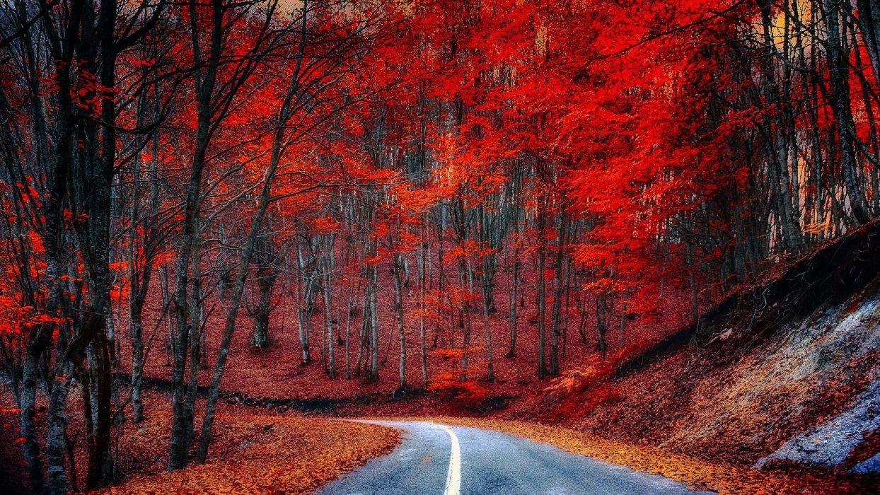 Roads Forests Autumn Trees Nature wallpaper