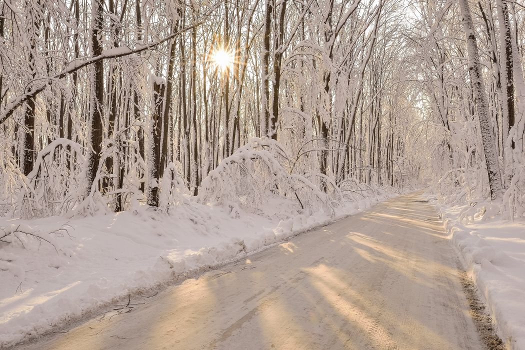 Roads Winter Forests Snow Nature wallpaper
