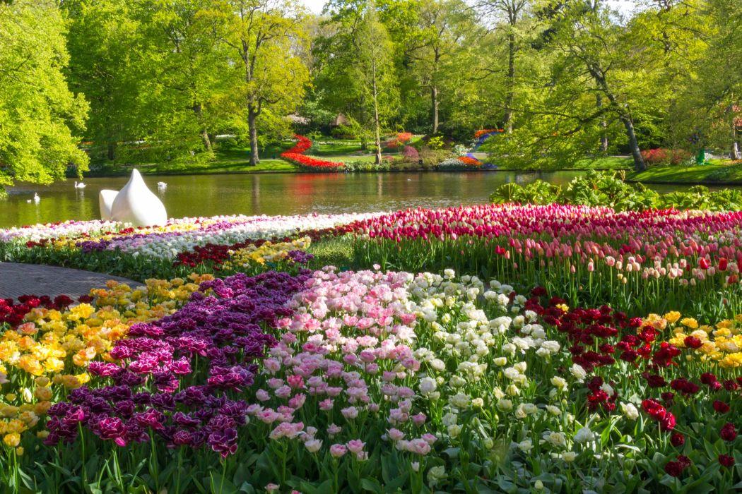 Netherlands Parks Pond Tulips Keukenhof Nature Flowers wallpaper
