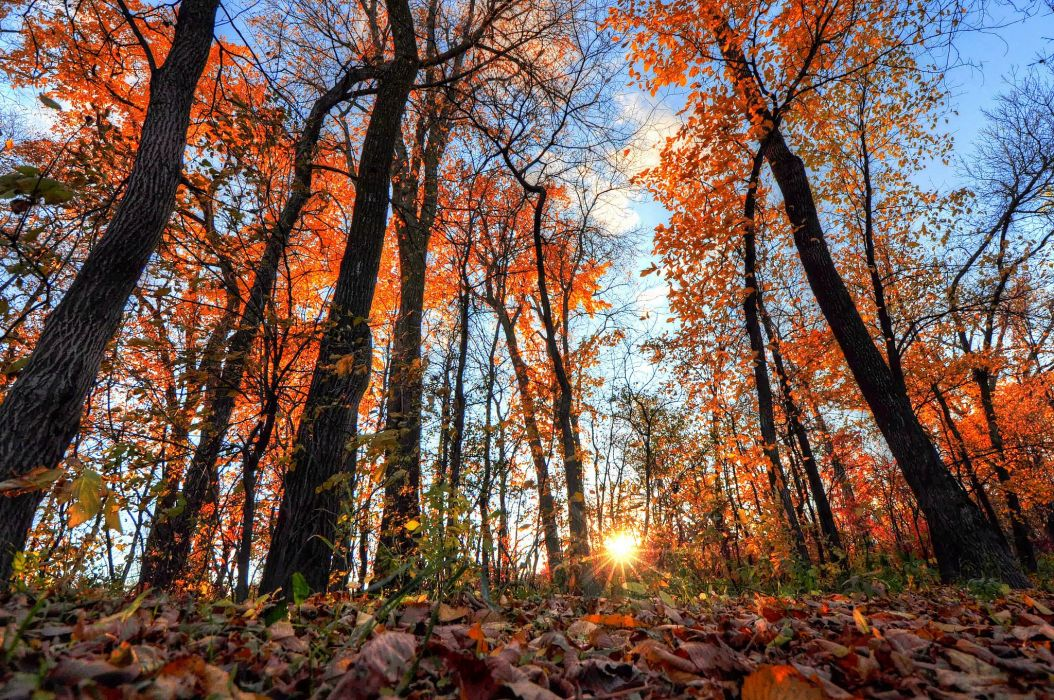 Forests Sunrises and sunsets Autumn Trees Rays of light Nature wallpaper