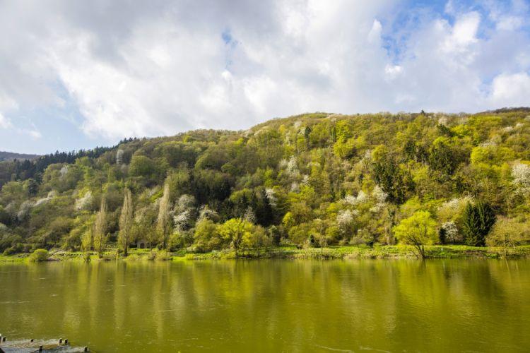 Germany Rivers Forests Spring Ediger-Eller Nature wallpaper