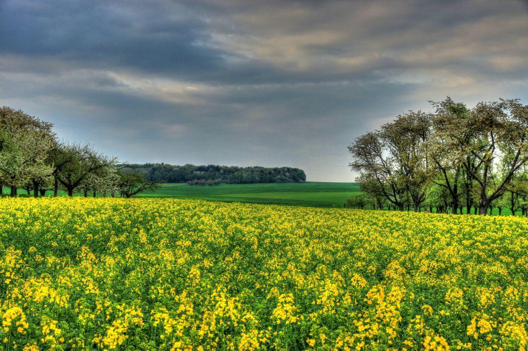 Germany Fields Rapeseed Hessen Nature wallpaper