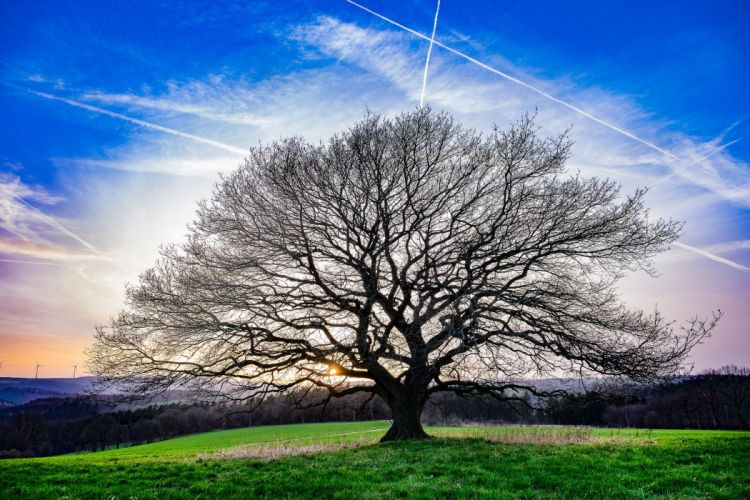 Trees Branches Nature wallpaper