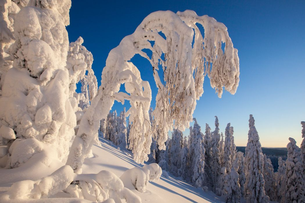 Winter Branches Snow Nature wallpaper