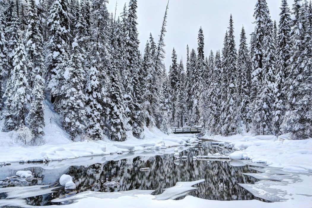 Winter Canada Forests Snow Trees Louise Yoho Nature wallpaper