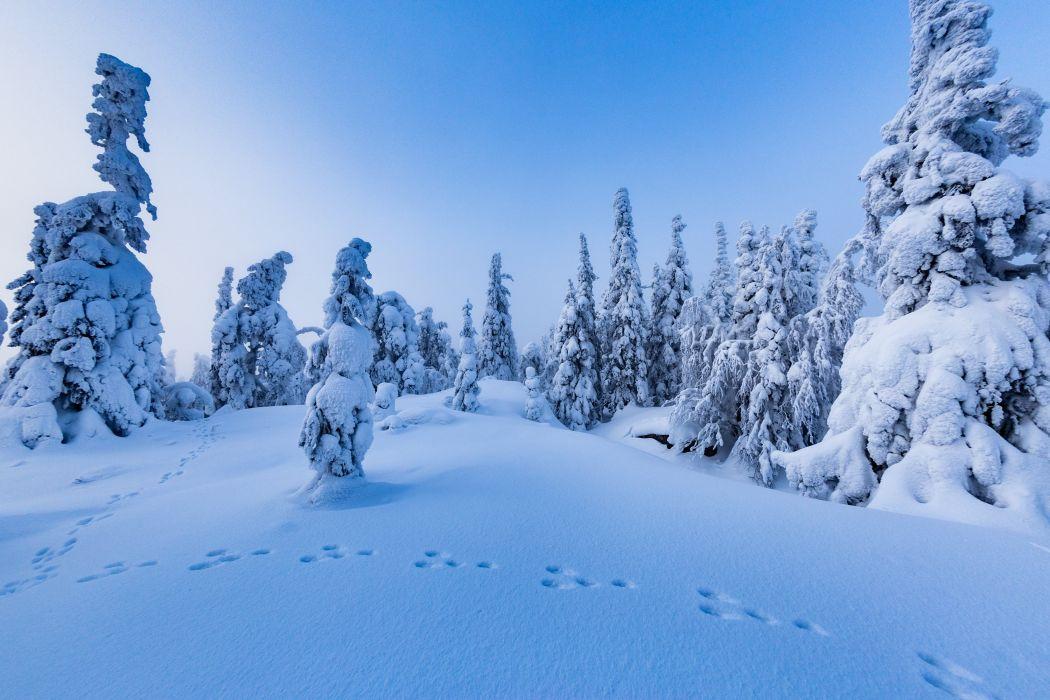 Winter Finland Snow Trees Nature wallpaper