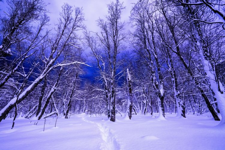 Winter Forests Negroid Trees Nature wallpaper