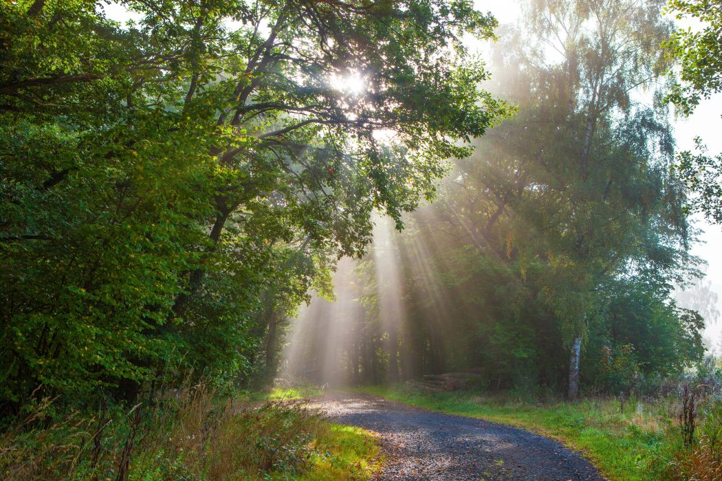Germany Forests Trees Rays of light Monreal Nature wallpaper