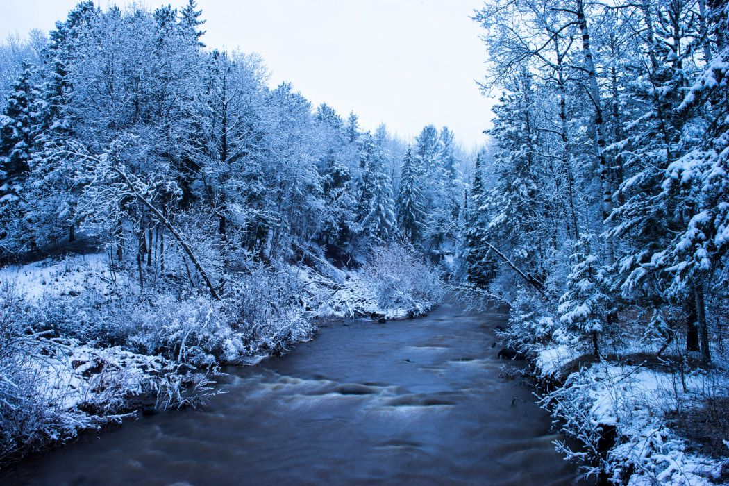 Rivers Forests Winter Trees Negroid Nature wallpaper