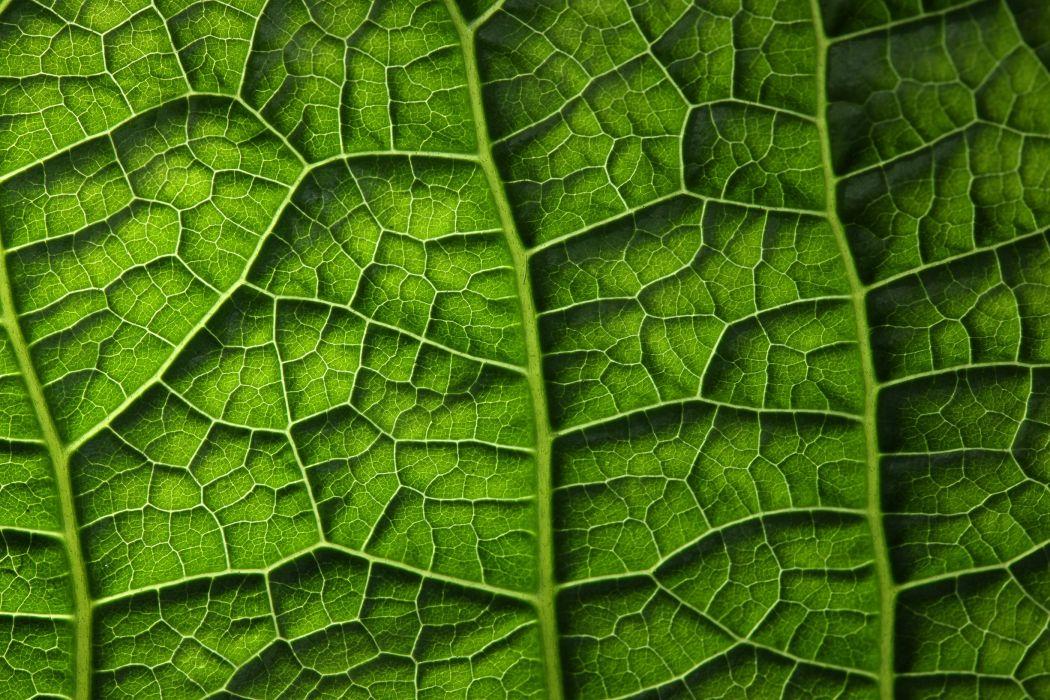 Texture Closeup Foliage Green Nature wallpaper