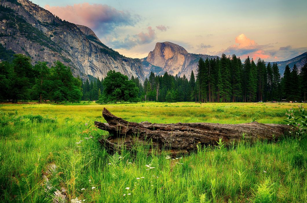 USA Parks Mountains Forests Scenery Yosemite Grass Nature wallpaper
