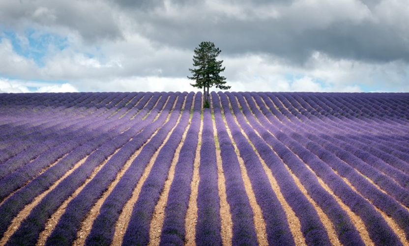Fields Lavandula Nature wallpaper