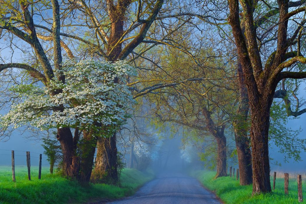 Roads Trees Fog Nature wallpaper