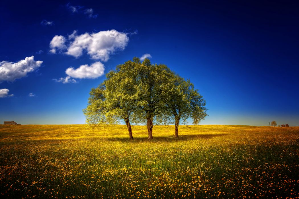 Fields Sky Trees Clouds Nature wallpaper