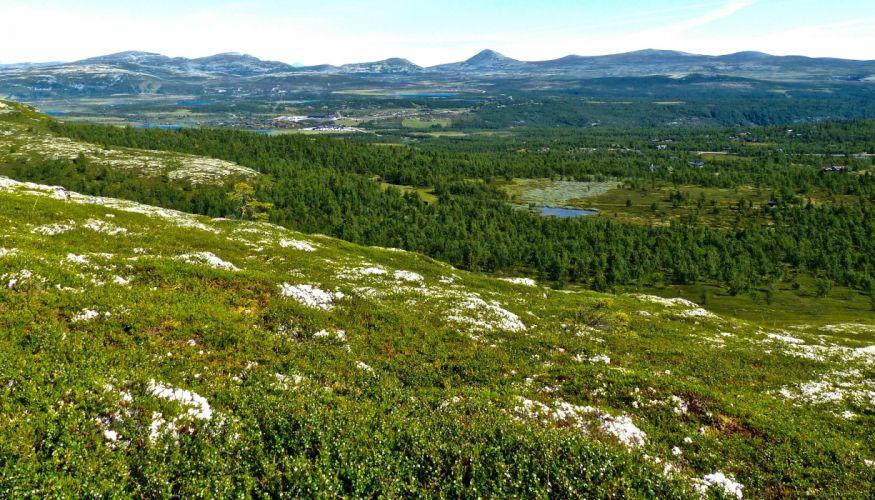 Norway Forests Grasslands Ringebu Nature wallpaper