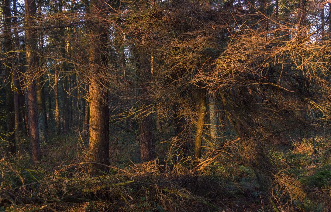Forests Trunk tree Branches Nature wallpaper
