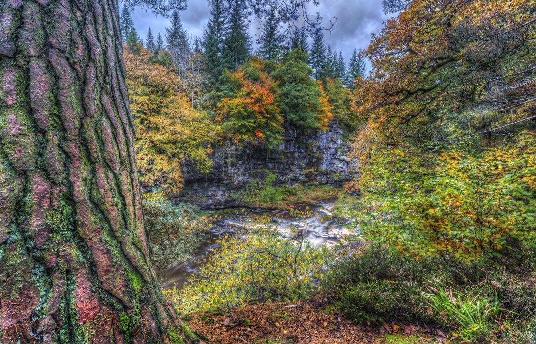 Scotland Rivers HDR Trunk tree Trees Clyde Valley Woodlands Nature wallpaper