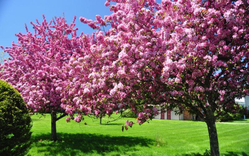 Spring Flowering trees Lawn Nature wallpaper