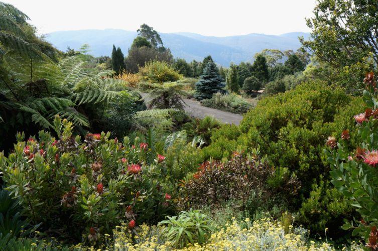 Australia Gardens Shrubs Australian Botanic Gardens Nature wallpaper