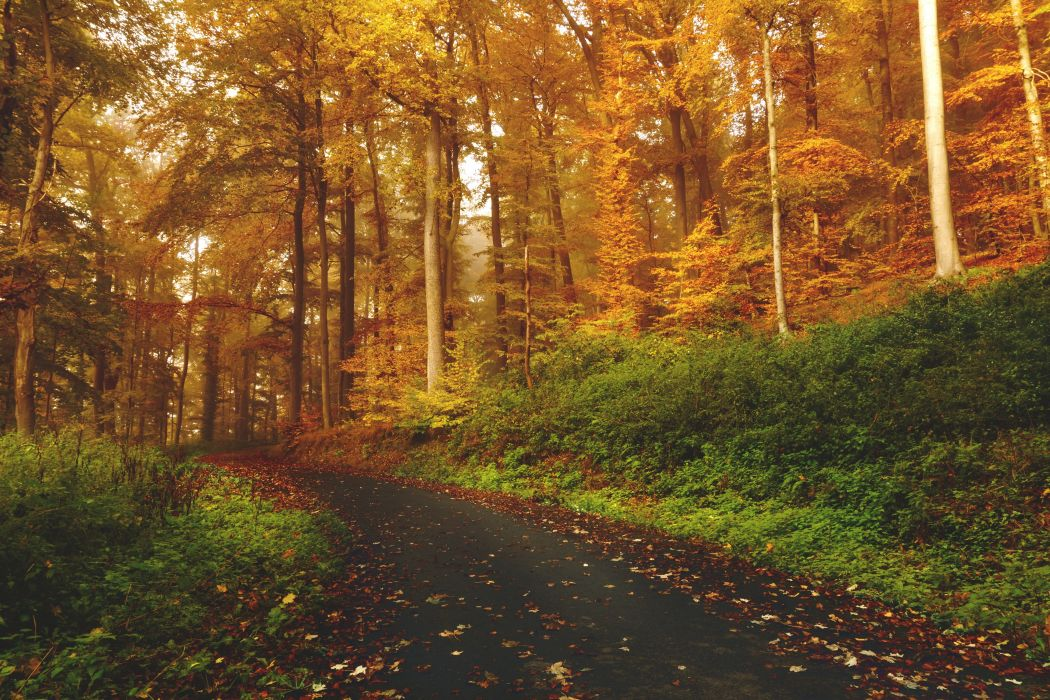 Forests Roads Nature wallpaper
