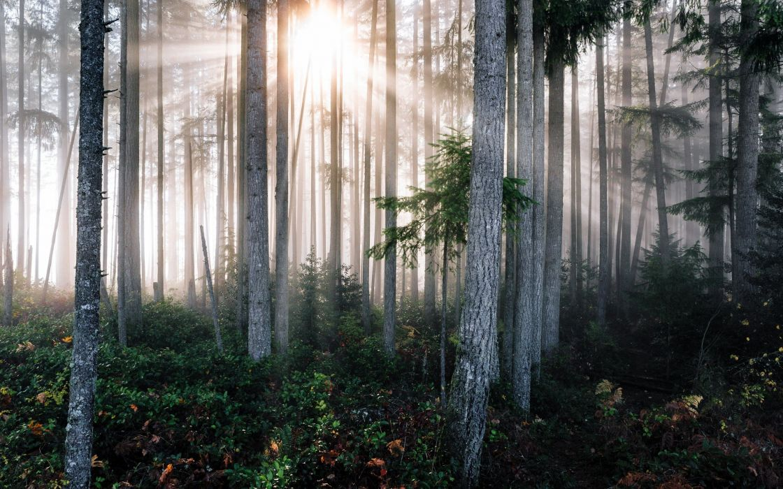 Forests Trees Rays of light Trunk tree Nature wallpaper