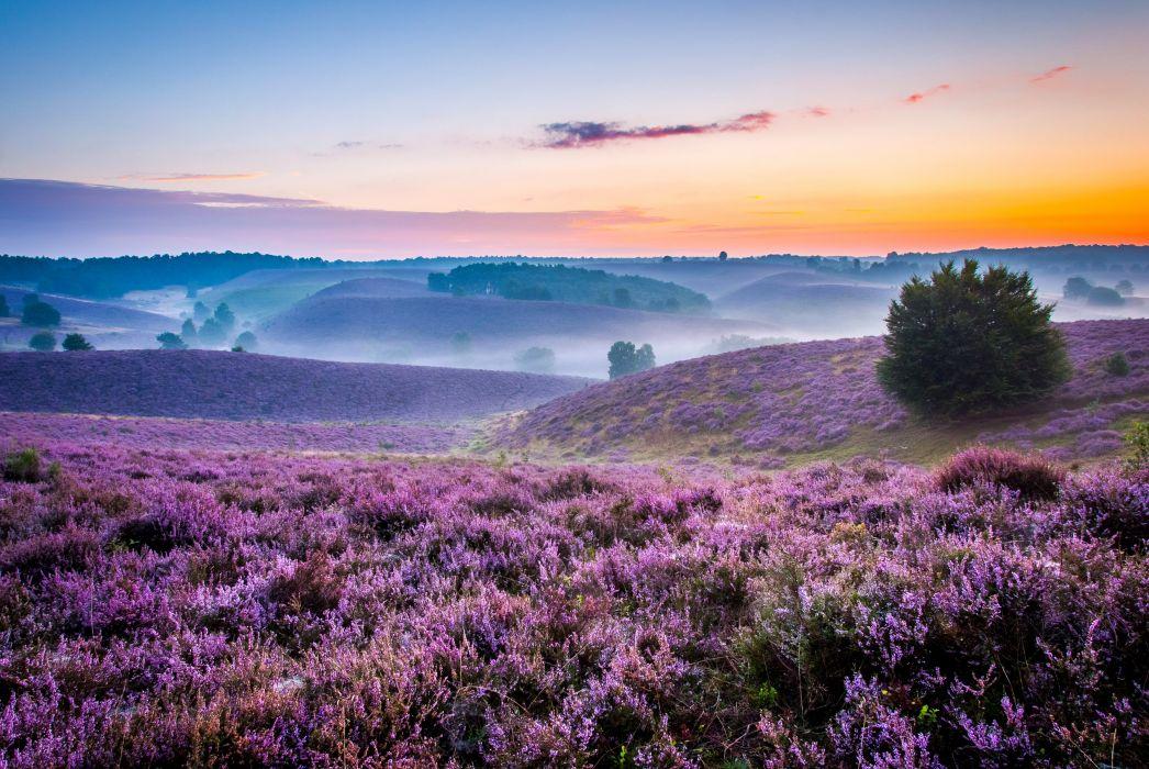 Scenery Lavandula Sunrises and sunsets Grasslands Nature wallpaper