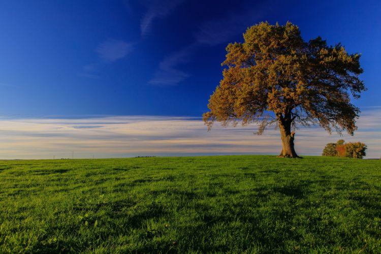 Germany Sky Bavaria Trees Grass Nature wallpaper