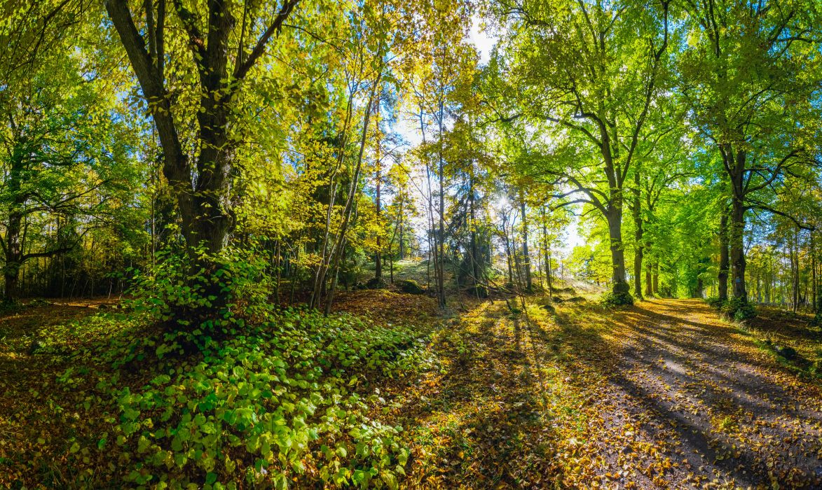 Forests Trees Trail Nature wallpaper