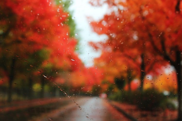nature trees rain leaves window panes autumn wallpaper