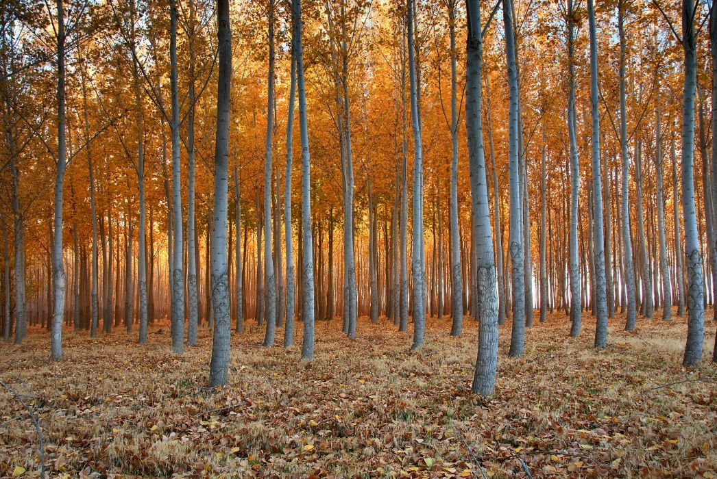 Forests Autumn Trees Nature wallpaper