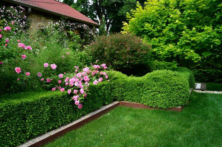 Gardens Roses Lawn Shrubs Nature wallpaper