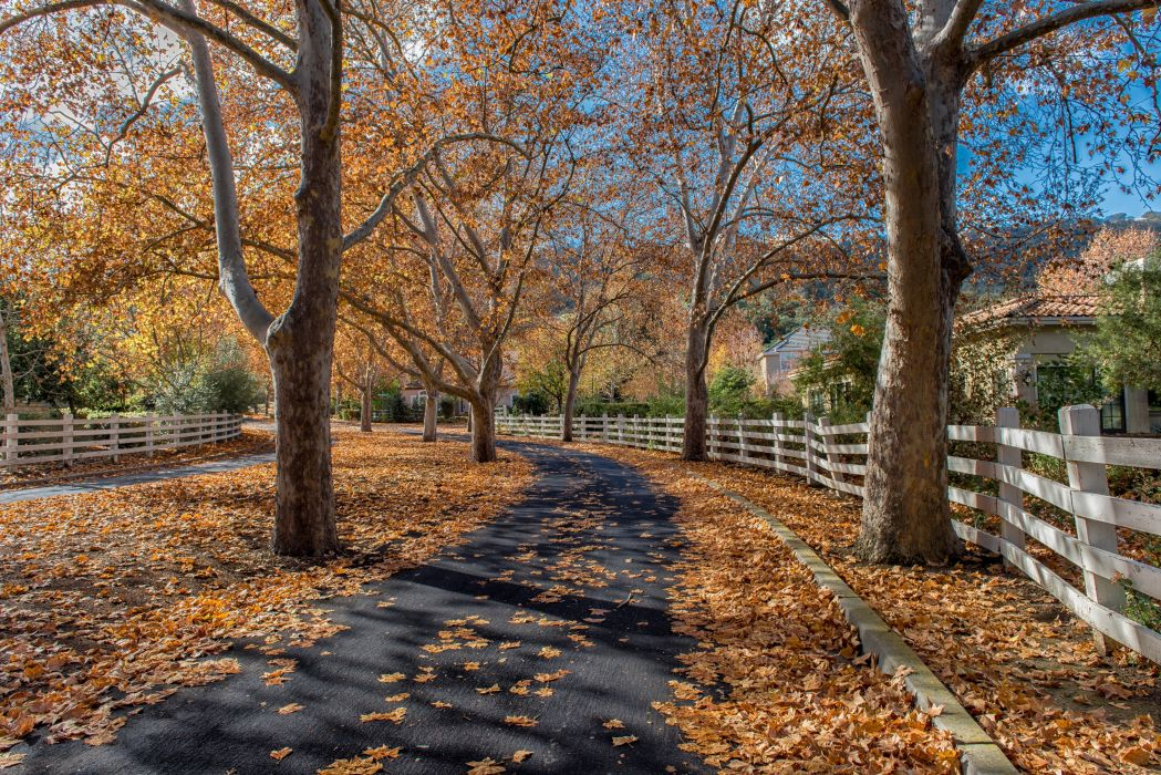 Autumn Trees Fence Pavement Nature wallpaper