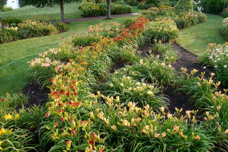 Parks Lilies Nature wallpaper