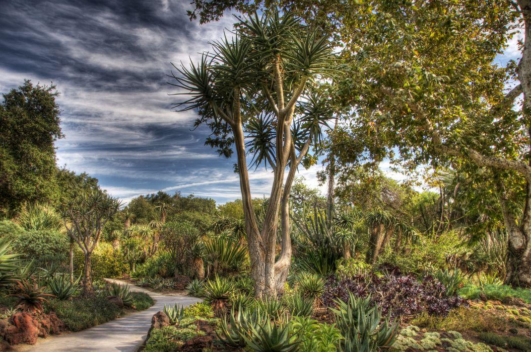 USA Gardens Trees Shrubs HDR Huntington Botanical Gardens San Marino Nature wallpaper